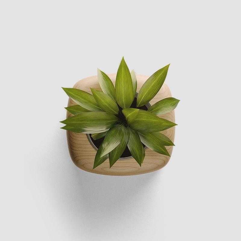 Plant Realistic Mockup